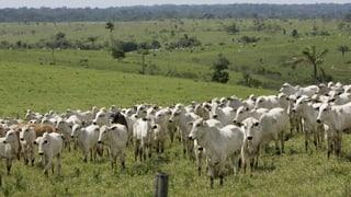 Mercosur-Abkommen steht unter Beschuss