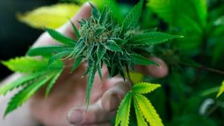 Florida bleibt Bollwerk gegen Marihuana