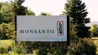 Saftige Geldstrafe für Monsanto