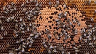 Mehr Bienen in Basel bedeuten eher Risiko als Chance