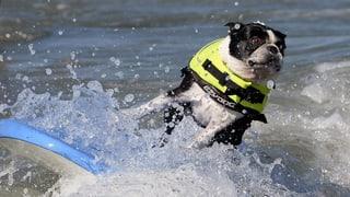 Der Surfsport ist auf den Hund gekommen