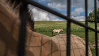 Thurgauer Tierquäler kann vorerst weiter Tiere halten