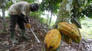 Reicht der höhere Preis für die Kleinbauern?