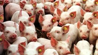 Video «Wirken Antibiotika bald nicht mehr?» abspielen