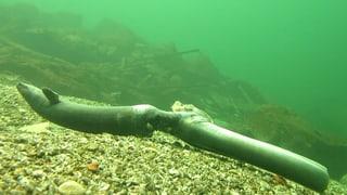 Video «Todesfalle Kraftwerk: Tausende Aale verenden grausam» abspielen
