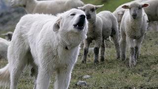 Co fan nos animals (Artitgel cuntegn audio)
