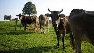 Bauernverband kritisiert geplante Marktöffnung