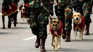 Welche Tiere waren in der Landesverteidigung tätig?