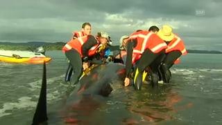 Erfolgreiche Rettungsaktion für gestrandete Wale