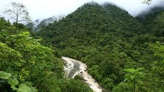 Urwaldschutz mit ermutigenden Resultaten