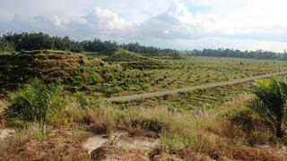 Erdbeben erschüttert Inselstaat Papua Neuguinea