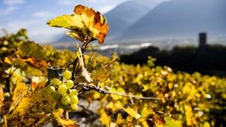 Bringen uns heisse Sommer andere Weinsorten?
