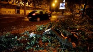 Entwurzelte Bäume und Stromausfälle