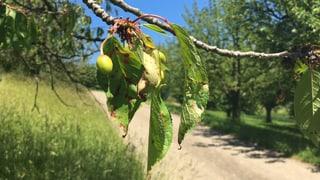 Zwei Millionen Franken Nothilfe für Baselbieter Bauern