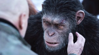 «War for the Planet of the Apes»: Auch Affen haben Gefühle
