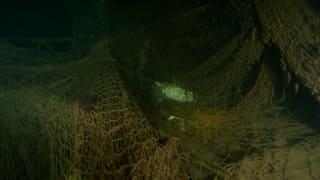 Geisternetze: Tödliche Falle für tausende Fische