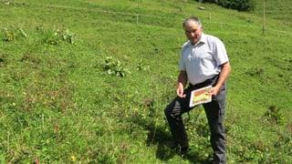 Viele Älpler im Kanton Bern hoffen auf Direktzahlungen