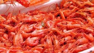 Shrimpsfarmen in der Schweiz ohne Tierschutzvorschriften