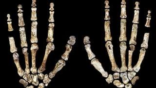 Homo naledi: Tarzan mit geschickten Händen