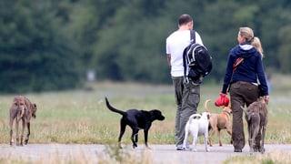 Ständerat will obligatorische Hundekurse abschaffen