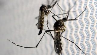 Lausanne sammelt Zika-Fälle