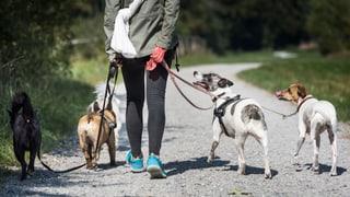 Bund mischt sich bei Hundehaltern nicht mehr ein