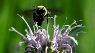Wo fressen Bienen am liebsten?