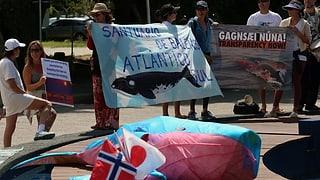 Walfangkommission lehnt Bildung von Schutzgebiet ab