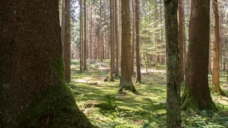 Eine Lockerung des Waldschutzes liegt in der Luft