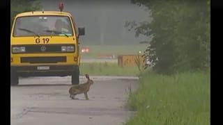 Naturschutzgebiet Flughafen (Artikel enthält Video)
