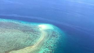 Great Barrier Reef – sblatgida da curals dramatica