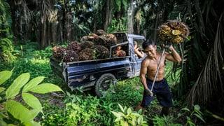 Zustände in Honduras werfen schiefes Licht auf Palmöl-Label