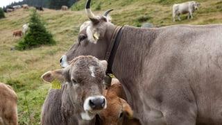 Flem, Laax e Falera vulan proteger meglier ils viandants