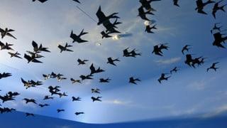 «Nur mit ausgestopften Vögeln konnten wir nicht mehr begeistern»