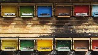 Bienensterben: Experten stehen vor Rätsel