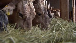 Subventionen für Milchbauern: Giesskannenzahlung statt Förderung