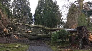 Erhebliche Schäden in Aargauer und Solothurner Wäldern