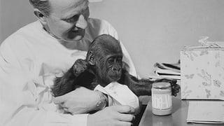 Zum 55. Geburtstag: Affenglacé für alle