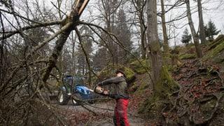 Grosse Waldschäden in Luzern und Zug