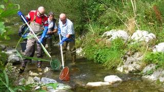 Appenzeller Gewässer sind sauber