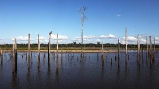 Grösste Geldgeber stoppen finanzielle Hilfe für Brasilien