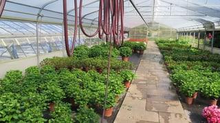 Petition für Gartenbauschule Niederlenz