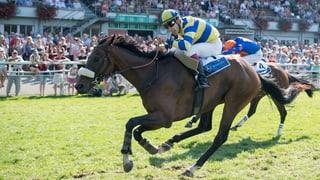 Heisser Pferderenntag im Schachen Aarau steht bevor