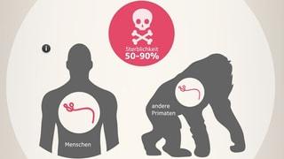 Ebola – in bis zu 90 % der Fälle tödlich