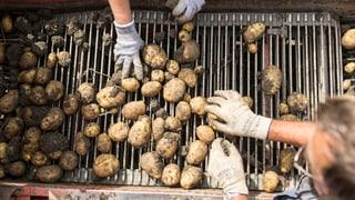 L'Uniun purila retira l'iniziativa «per la segirtad alimentara»