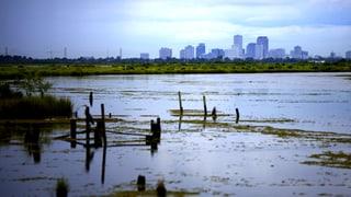 Klima-Debatte: Überleben im Sumpf der Halbwahrheiten