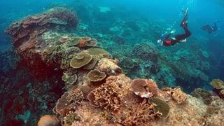 So viel kostet das grösste Korallenriff der Welt