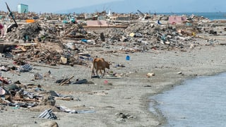 Die drei Katastrophen von Palu