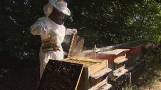 Video «Pestizide – unheimlich wirksam: Das Leiden der Bienen (2/3)» abspielen