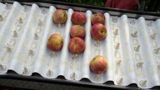 Obsthändler vor Kurzarbeit